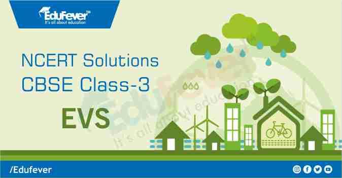 Class 3 EVS NCERT Solution