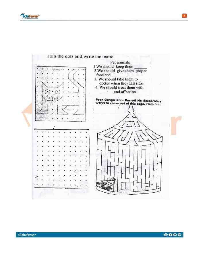 Class 3 EVS Practice Worksheet